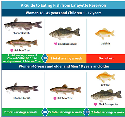 Fish advisory for lafayette reservoir in contra costa for Safest fish to eat 2017