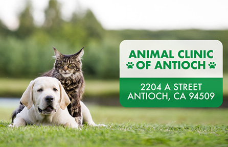New Business Animal Clinic Of Antioch Opens Monday East County Today